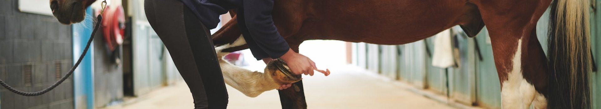 Equine Management (City & Guilds Level 3 Technical Diploma) - Suffolk Rural (Otley)