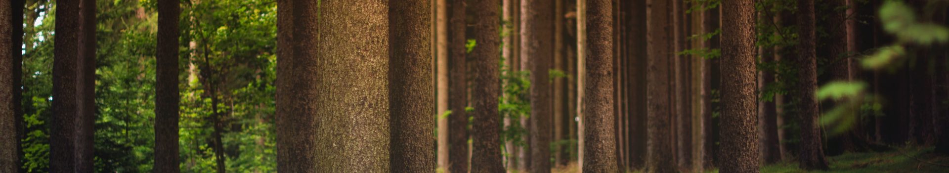 Felling & Processing Trees up to 380mm (CS31) (Short Course) - Suffolk Rural (Otley)