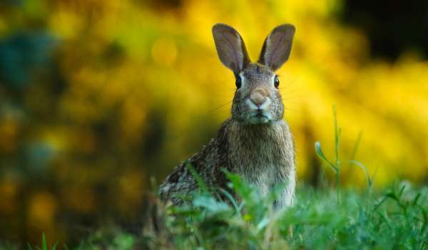 Pest Control: Rabbits and Moles using Aluminium Phosphide (Short Course) - Suffolk Rural (Otley)