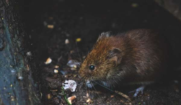 NPTC Rats & Mice Pest Control (Part Time) - Suffolk Rural (Otley)
