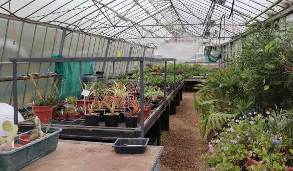 Horticulture (Level 2 Practical Certificate, Part Time) - Suffolk Rural