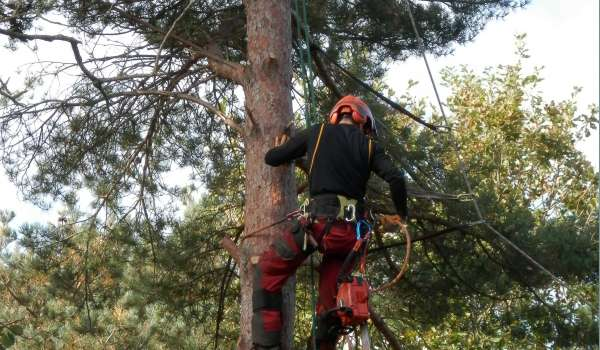 Aerial Cutting with a Chainsaw Using Free-fall Techniques (Short Course) - Suffolk Rural (Otley)