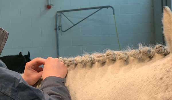 Equine (Horse Care) (Level 1) - Suffolk Rural (Otley)