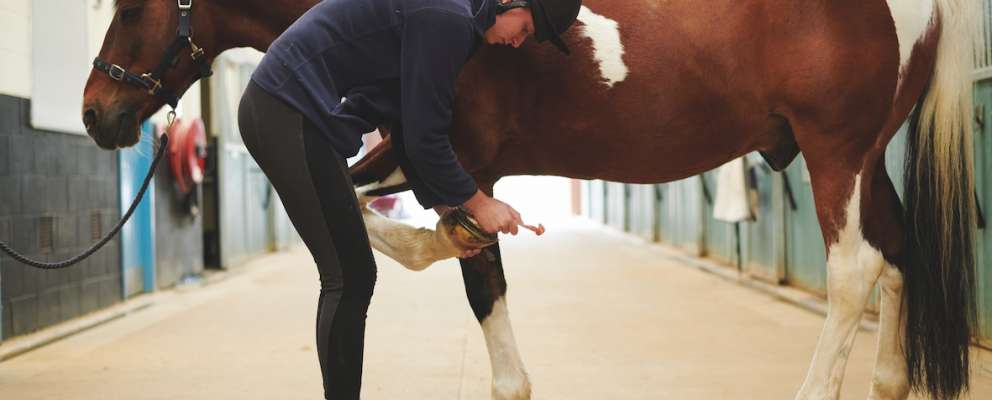 Equine (Horse Care) (Level 2) - Suffolk Rural (Otley)